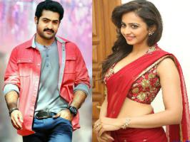 Post succsesful Temper, NTR will start shooting for his upcoming untitled Sukumar project from 3rd March. Rakul Preet Singh will play NTR's love interest in this Sukumar directorial.