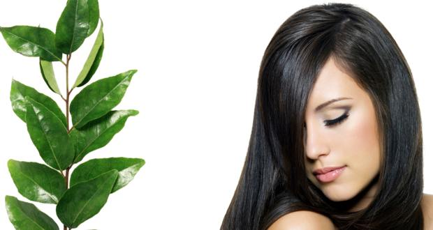Stop hair fall and greying with curry leaves